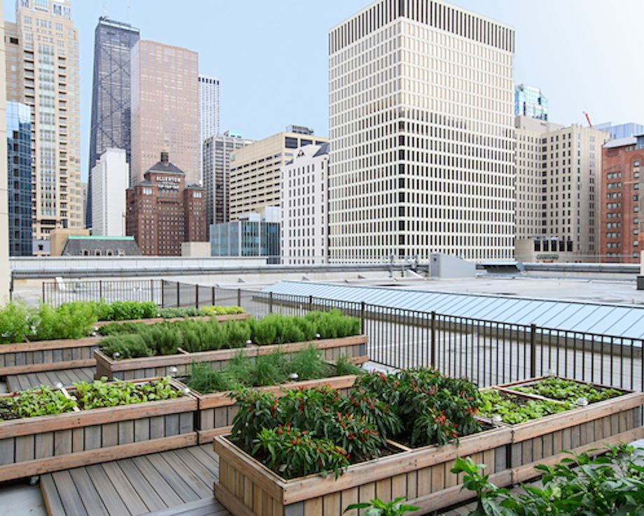 Rooftop Garden at Chicago Marriott Downtown Magnificent Mile