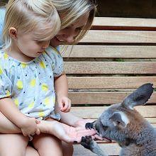 Mom with daughter feeding kangaroo - Gaylord Texan