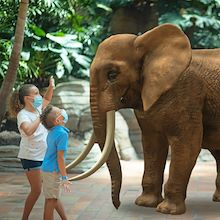 Two kids in masks in front of virtual elephant