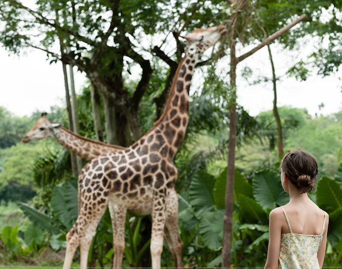 Fort Worth Zoo near The Worthington Renaissance Fort Worth Hotel