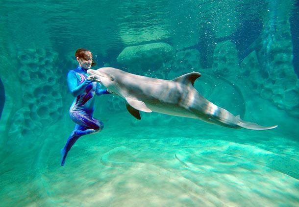 Dolphin Tales Georgia Aquarium