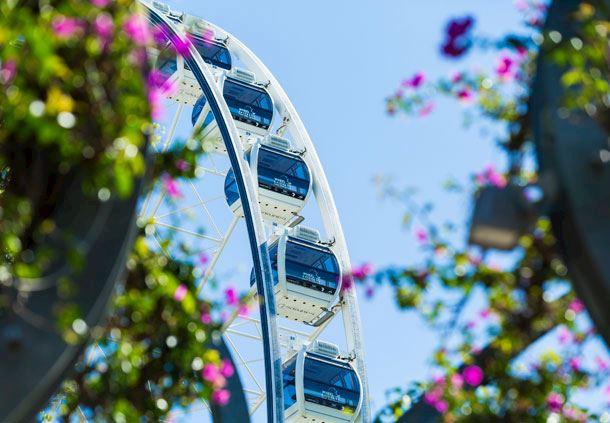 The Wheel of Brisbane