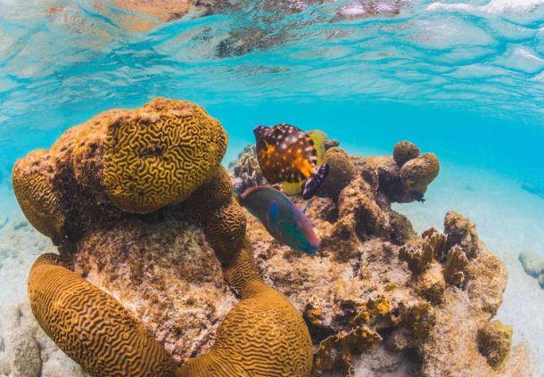 Bonaire Fish & Reefs