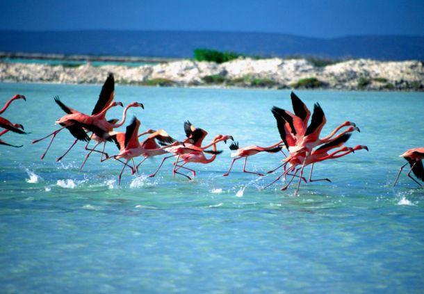 Caribbean Wild Life