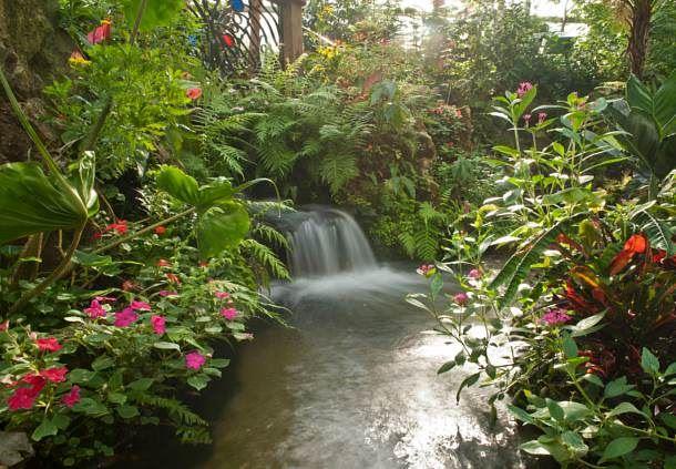 McGuire Center - Butterfly Rainforest
