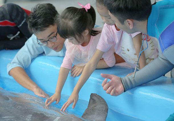 Ocean Park Meet the Dolphin