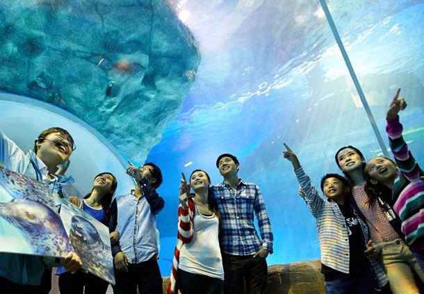 Ocean Park Spotted Seal (Animal Fun Talk)