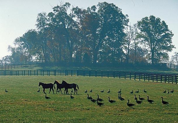 Loudoun Horse Country