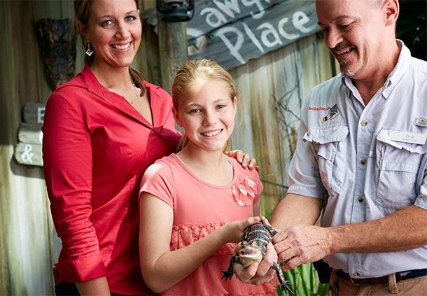 Gator Experience at Gaylord Palms
