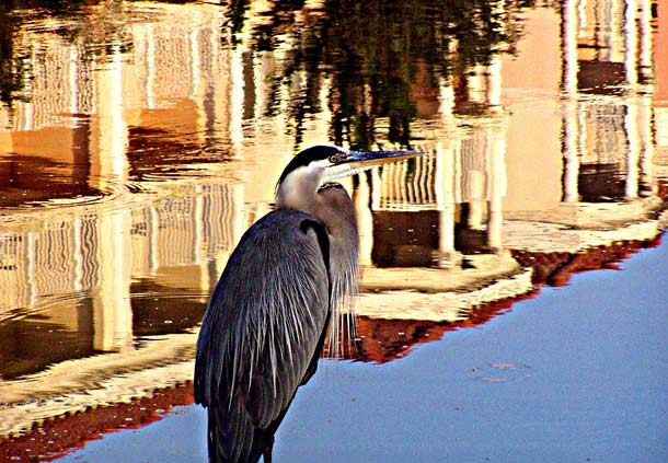Blue Heron at Grande Vista Golf Club