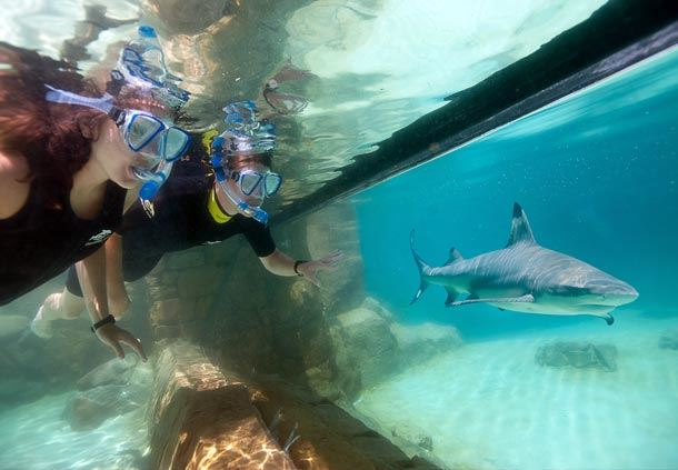 Shark viewing at Grand Reef