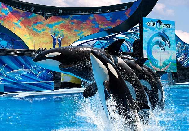 SeaWorld® Family Adventure
