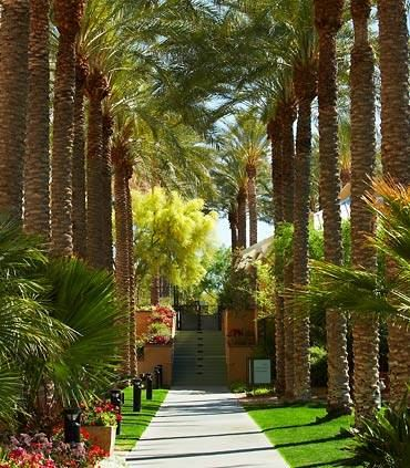 Palm Lined Pathways
