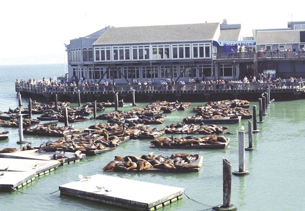 Pier 39's Sea Lions