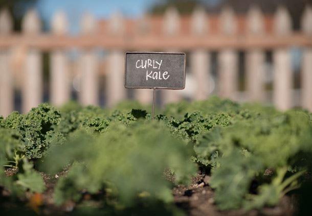Year-Round Culinary Garden