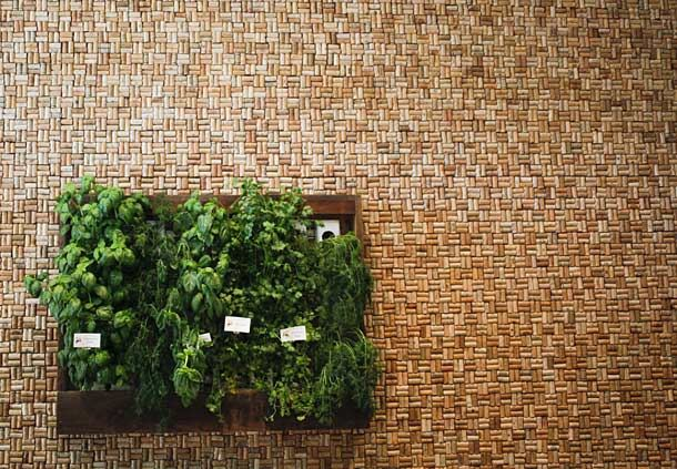 Living Herb Wall