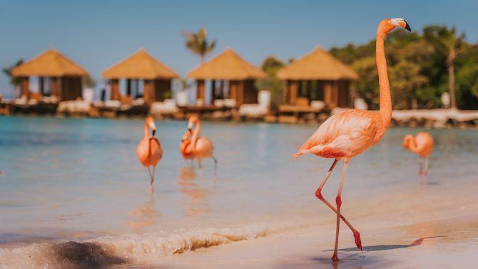 The Perfect Oasis In Aruba