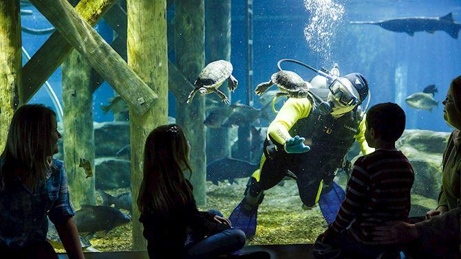 chash-aquarium-home02