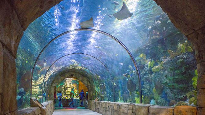 msyci_AttractionsNearFrenchQuarter_aquarium