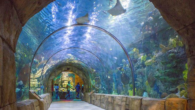 msycm_AttractionsInMetaire_aquarium