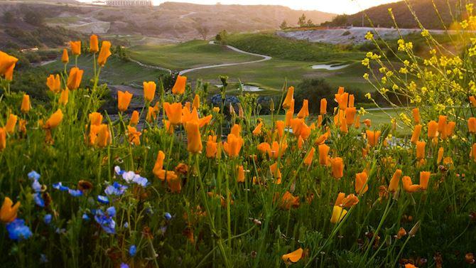 sanbs-golf-home01